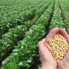 2020年农业转基因生物安全证书批准清单