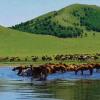百家旅行社走进绿色安全赤峰体验之旅旅游宣传活动启动仪